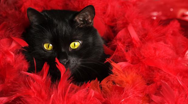 Кошки: магия и приметы
